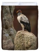 King Vulture Sarcoramphus Papa Perched Duvet Cover by Pete Oxford