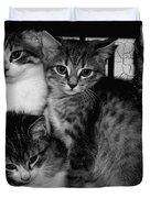 Kittens Corner Duvet Cover by Christy Leigh