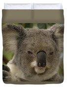 Koala Phascolarctos Cinereus Portrait Duvet Cover by Pete Oxford