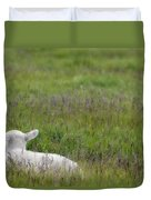 Lamb In Pasture, Alberta, Canada Duvet Cover