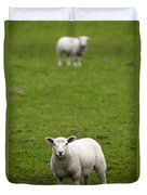 Lambs In A Field Duvet Cover