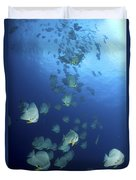 Large School Of Batfish, Christmas Duvet Cover
