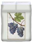 Le Moyne: Grape Vine, C1585 Duvet Cover