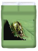 Leaf Beetle Calligrapha Sp Portrait Duvet Cover