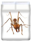 Leafcutter Ant Worker Costa Rica Duvet Cover