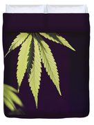 Leaves Of A Marijuana Plant Cannabis Duvet Cover