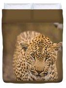 Leopard Panthera Pardus, Arathusa Duvet Cover