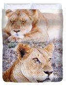 Lionesses Lying In Shade In Maasai Mara Duvet Cover