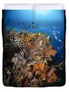 Lionfish, Indonesia Duvet Cover