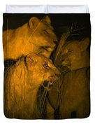 Lions At Night Duvet Cover