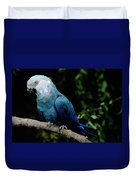Little Blue Macaw Cyanopsitta Spixii Duvet Cover