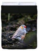 Little Red Beak Duvet Cover