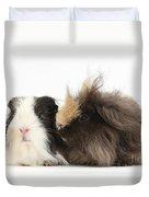 Long-haired Guinea Pigs Duvet Cover