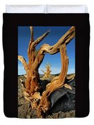 Looking Through A Bristlecone Pine Duvet Cover