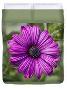 Lovely African Daisy - Osteospermum Duvet Cover