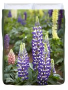Lupine Lupinus Sp Flowers Duvet Cover