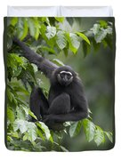 M�llers Bornean Gibbon Hylobates Duvet Cover
