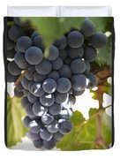 Malbec Grapes On The Vine Duvet Cover