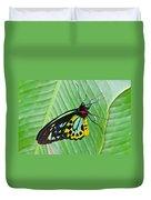 Male Cairns-birdwing Butterfly Duvet Cover
