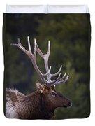 Male Elk Cervus Canadensis Duvet Cover