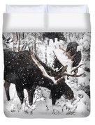 Male Moose Grazing In Snowy Forest Duvet Cover