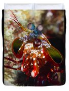 Mantis Shrimp, Australia Duvet Cover