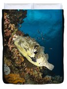 Map Pufferfish, Indonesia Duvet Cover
