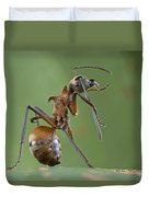 Marauder Ant Polyrhachis Sp Cleaning Duvet Cover