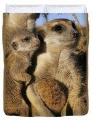 Meerkat Pups With Their Caretaker Duvet Cover