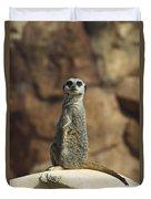 Meerkat Suricata Suricatta Sunning Duvet Cover by Konrad Wothe