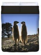Meerkats Start Each Day With A Sunbath Duvet Cover