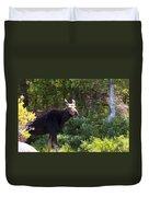 Moose Baxter State Park 4 Duvet Cover