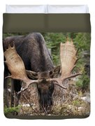 Moose. Male Feeding In A Forested Area Duvet Cover