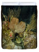 Moray Eel, Belize Duvet Cover