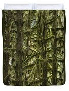Moss Covered Trees, Hoh Rainforest Duvet Cover