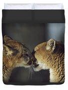 Mountain Lion Felis Concolor Cub Duvet Cover by David Ponton