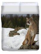 Mountain Lion Puma Concolor Sitting Duvet Cover