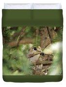 Mourning Dove Nesting Duvet Cover