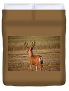 Mule Deer Buck In An Alberta Field Duvet Cover