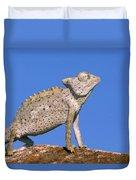 Namaqua Chameleon Chamaeleo Namaquensis Duvet Cover