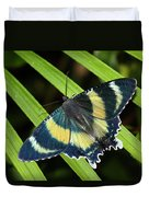 North Queensland Day Moth Alcides Duvet Cover