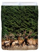 Northcoast Elk Along The 101 Duvet Cover