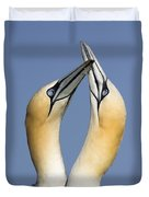 Northern Gannet Morus Bassanus Pair Duvet Cover