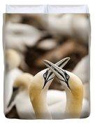 Northern Gannets Morus Bassanus Rubbing Duvet Cover