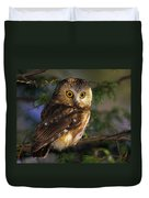 Northern Saw-whet Owl Duvet Cover