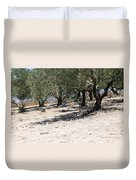 Olive Trees In Sebastia Nablus Duvet Cover