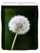 One Dandelion Flower Isolated  Duvet Cover