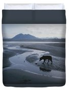 One Of Vargas Islands Habituated Wolves Duvet Cover