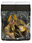 Orange Mantis Shrimp In Its Burrow Duvet Cover
