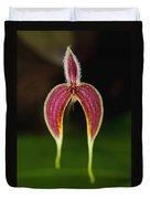 Orchid Bulbophyllum Blumei Flower Duvet Cover